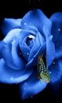 Blue Butterfly Rose Live Wallpaper screenshot 1/3