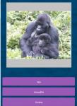 Animals guessing screenshot 5/6