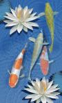 3D freshwater Fish pond screenshot 5/6