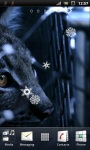 Mysterious Black Cat Live Wallpaper screenshot 3/3