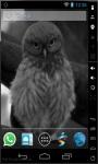 Funny Owl LWP screenshot 1/3