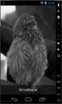 Funny Owl LWP screenshot 2/3