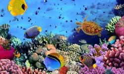 HD Fish Live Wallpaper - Live Fun screenshot 2/3