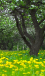 Orchard Spring Live Wallpaper screenshot 1/3