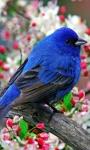 Bird Wallpapers Android Apps screenshot 4/6