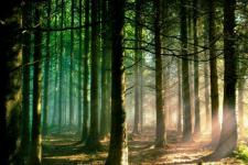 amazing forest hd wallpaper screenshot 1/1