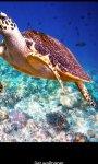 Aquatic HD Wallpaper - Movable screenshot 2/4