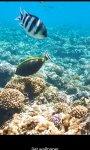 Aquatic HD Wallpaper - Movable screenshot 3/4