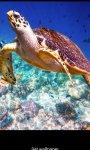 Aquatic HD Wallpaper - Movable screenshot 4/4