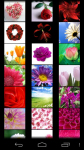 Flower Wallpapers free screenshot 2/5