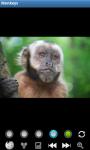 Monkeys : Funny Wild Animals screenshot 1/6