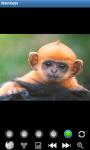Monkeys : Funny Wild Animals screenshot 2/6