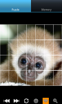 Monkeys : Funny Wild Animals screenshot 5/6