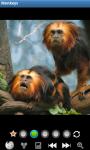 Monkeys : Funny Wild Animals screenshot 6/6