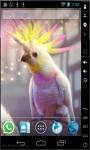 Crested Parrot Live Wallpaper screenshot 1/2