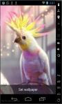 Crested Parrot Live Wallpaper screenshot 2/2