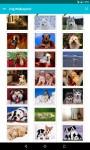 Dog Wallpapers Android 3x screenshot 1/6
