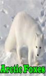Arctic Foxes screenshot 1/3