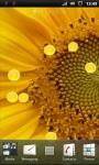 Beautiful Sunflower Live Wallpaper screenshot 1/3