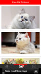 Free Cat Pictures screenshot 2/6