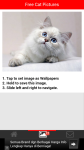 Free Cat Pictures screenshot 3/6