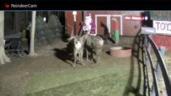 ReindeerCam primary screenshot 1/4