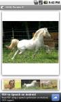 OMG Ponies screenshot 1/3