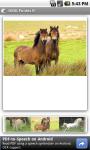 OMG Ponies screenshot 2/3