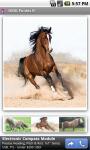 OMG Ponies screenshot 3/3
