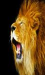 Lion Live Wallpapers Free screenshot 2/4