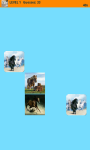 Horses Memory Game screenshot 6/6