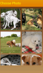 Doggies Slider Photo Puzzle screenshot 2/4