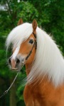 White Hair Horse Live Wallpaper screenshot 1/3