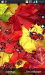 LadyBug Crusher Live Wallpaper screenshot 2/4