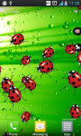 LadyBug Crusher Live Wallpaper screenshot 4/4