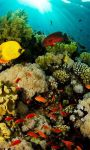 Ocean Fish Live Wallpaper HD screenshot 1/4