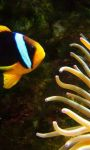 Ocean Fish Live Wallpaper HD screenshot 3/4