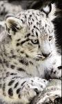 Leopard Baby live wallpaper screenshot 3/3