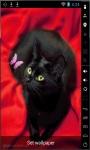 Cat And Butterfly Live Wallpaper screenshot 1/2