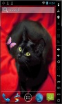 Cat And Butterfly Live Wallpaper screenshot 2/2