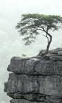Tree Wallpapers app screenshot 1/3