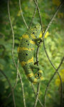Chameleon Free screenshot 3/5
