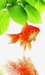 Gold Fish live Wallpape screenshot 1/3
