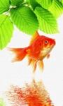 Gold Fish live Wallpape screenshot 2/3