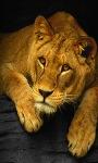 Cool Tiger Live Wallpaper screenshot 2/3