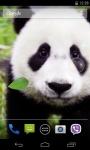 Panda Live Wallpaper 3D screenshot 1/4