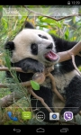 Panda Live Wallpaper 3D screenshot 2/4