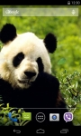 Panda Live Wallpaper 3D screenshot 3/4