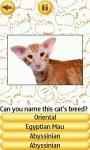 Cat Breeds Quiz screenshot 2/4