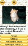 Cat Breeds Quiz screenshot 3/4